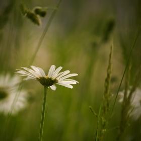 Z trávy