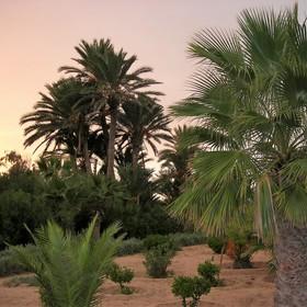 Palmová zahrada (k večeru)