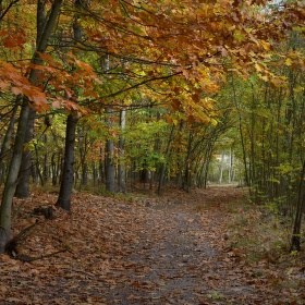 Podzimním Polabím