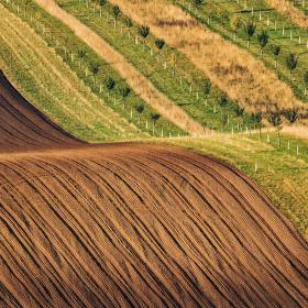 Vlna u biopásů