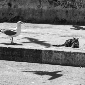 Stinná stránka kočičího života