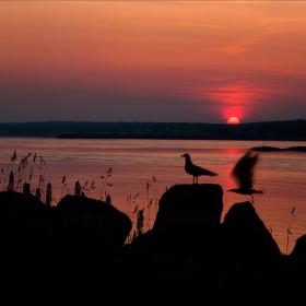 večerní lov