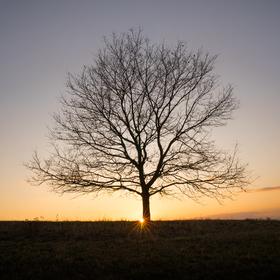 Strom samotář