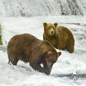obrázky z přírody Severní Ameriky (11)