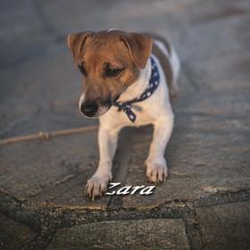 JRT - Zara