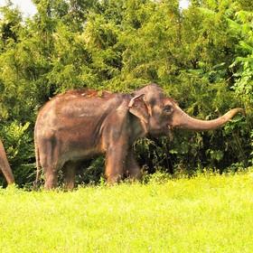 Slon indický - na svačince