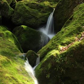 Zelená atmosféra