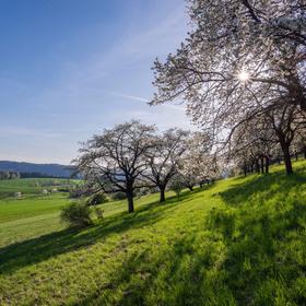 Jaro v plné síle