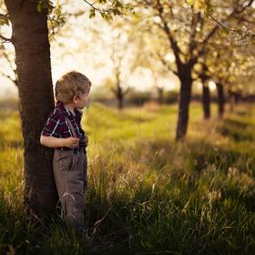 V třešňovém sadu