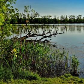 Pozdní odpoledne u rybníku Nová Louka...