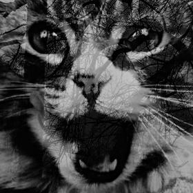 kočka...