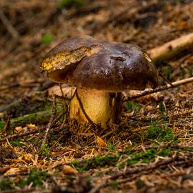 Letos první houbová