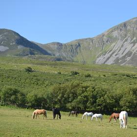 Irská pohodička pod horou Sv. Patrika
