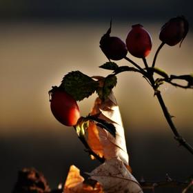v objetí podzimu...