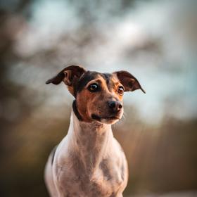 Malý pes s velkým snem