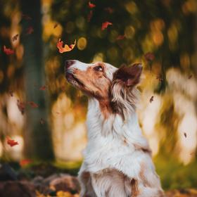 Podzimní Angie