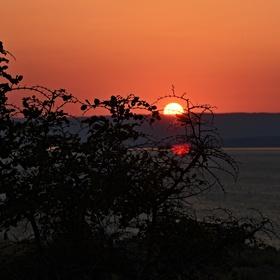 Slunce v trní
