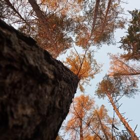 Život stromu