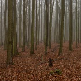 Ponurost listnatého lesa v zimě