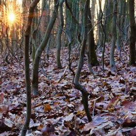 Západ slunce z lesa
