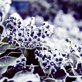 Zima v zahradě