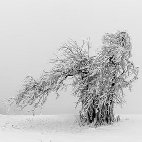 Led, sníh a mlha