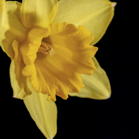 Narcis 3