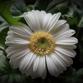 Květinka (samotářka) :-)