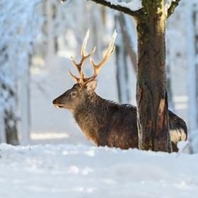 letošní zima v přírodě (26)