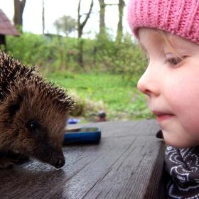 Nina a ježek