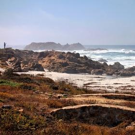 Bird rock-Pebble beach-Monterey-USA