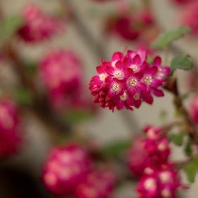 Jarní květ 2
