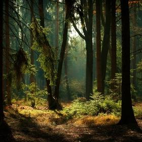 Lesní zátiší IV