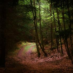 Lesní zátiší VII
