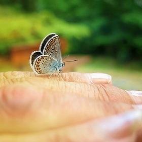 Motýl na ruce