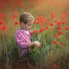 Když kvetou vlčí máky