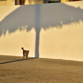 Kočička pod slunečníkem