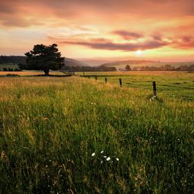 Podvečer na pastvinách