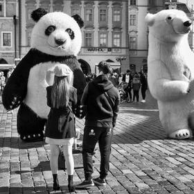 panda a medvěd
