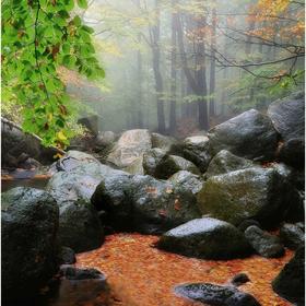 Podzim na Černém potoku