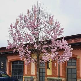 Jaro na pražské tržnici v Holešovicích