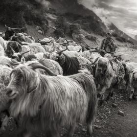 hory v Nepálu oblast pastevců