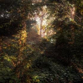 Průhonický les