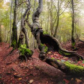 Bukovým lesem