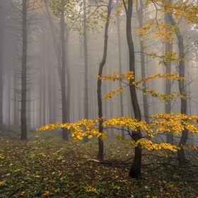 Tváře podzimu