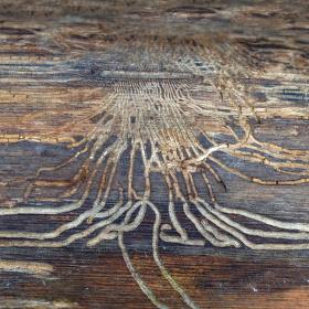 Když červ na dřevo maluje