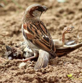 I vrabci mají své dny.. (dodatek k předchozí foto )
