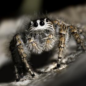 Hop a je tu pavouk