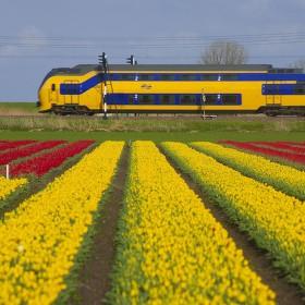 holandské farby