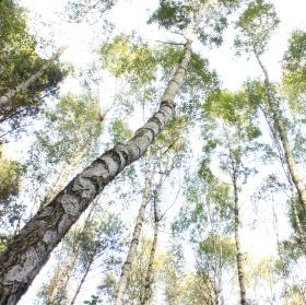 procházka v lese 3